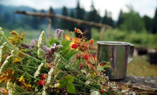 лечебные травы и аромамасла